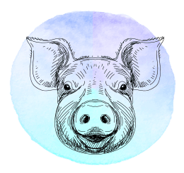 Porco em 2019
