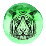 Tigre em 2019
