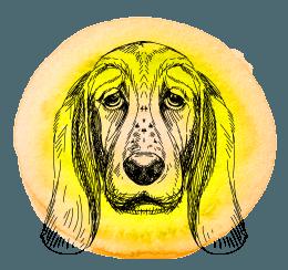 Cão em 2019