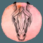 Cavalo em 2019