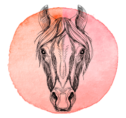 cavalo-2019