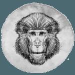 Macaco em 2019