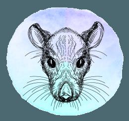 Rato em 2019